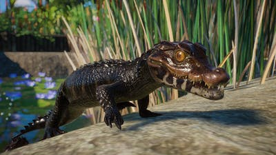 PZ_Aquatic_Paid_Screenshots_Caiman_02_1920x1080