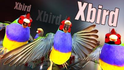 Xbird
